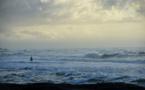 Australie: un surfeur gravement blessé par un requin