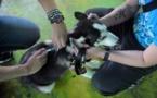 Vétérinaire : un diplôme bientôt obligatoire pour exercer