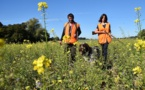 Normandie: polémique autour d'un radar à oiseaux pour les chasseurs financé par la Région