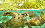 Zoom sur le centre de protection des tortues marines de Bora Bora