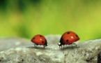"""Les insectes stars de """"Minuscule"""" reviennent dans un deuxième film"""