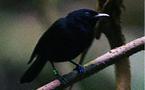 Il faut sauver les oiseaux bavards du roi qui tousse la nuit !