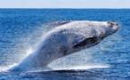 Page enfant : c'est la journée de la baleine !