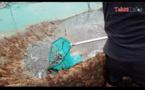 600 kg de crevettes bleues volés à Mitirapa