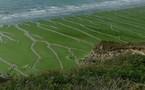 Algues vertes : la mort en série de sangliers sur une plage relance le débat