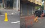 Stationnement à Papeete : encore de l'incivisme