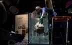 Insolite plongée au fond des océans à la Grande Galerie de l'Evolution