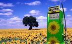La France se dote d'un Observatoire des biocarburants