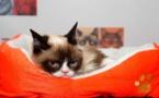 "Coqueluche de l'internet, ""Grumpy Cat"" est morte"