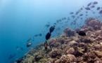 La diversité des poissons du lagon vitale pour le corail