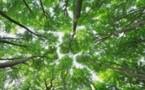 Forêts capteuses de CO2: les forestiers privés veulent un soutien financier