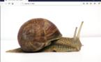 L'internet polynésien classé 177e dans le monde