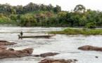 Guyane: l'acoupa rouge, poisson menacé par un trafic de vessies natatoires