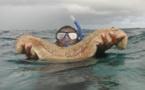 La pêche aux rori reprend à Fakarava, Toau et Kauehi