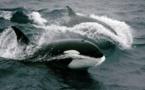 Russie: libération des derniers orques entassés dans des bassins