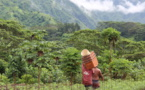 Pesticides : les produits locaux plus sains que les importations
