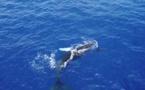 La loi qui interdit les photos de baleines, vini, tiare...