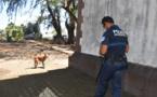 Les chiens errants interdits à Mahina dès le 1er décembre