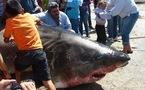 A trois kilomètres des côtes mexicaines deux pêcheurs remontent un requin blanc de près de six mètres