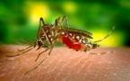 163 nouveaux cas de dengue