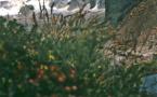 Torres del Paine, diadème de la Patagonie