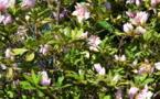 Les 3e Floralies pour composer le jardin de ses désirs