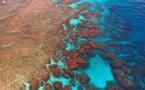 Australie: la Grande Barrière vient de vivre son pire épisode de blanchissement de coraux