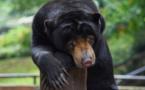 Virus: les animaux des zoos d'Indonésie menacés de famine