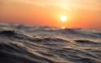 Pas de coronavirus détecté dans les coquillages ou l'eau de mer (Ifremer)
