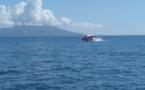 Les premières baleines vues à Taapuna