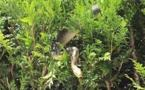 Alsace: il part aux champignons et découvre un python