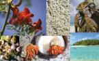Kauehi, côté nature