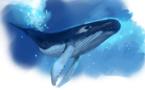 """Page enfant : """"Les animaux du Pacifique"""", saison 2 !"""