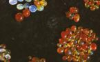 Opales : l'arc-en-ciel minéral du Mexique