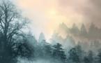 """Feux de forêt: épisodes """"sans précédent"""" en 2020, mais tendance à la baisse globale"""