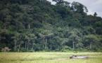 Dans la forêt vierge gabonaise, sur la piste des virus émergents