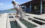 Déchets perlicoles : nettoyage des lagons en perspective