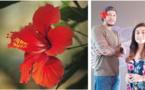 L'hibiscus, un trésor sous-exploité dans le viseur d'une start-up locale