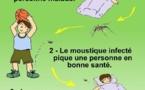 Dengue : le vrai et le faux sur le virus et la maladie