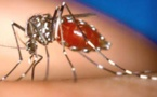 L'épidémie de dengue toujours soutenue