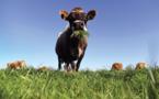 Moins de vaches, plus de voitures électriques: les pistes néo-zélandaises vers la neutralité carbone