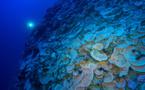 Refuge en eaux profondes, un espoir pour la restauration du corail