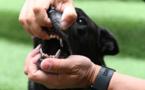 Mort d'Elisa Pilarski par morsures canines: son compagnon mis en examen pour homicide involontaire