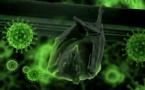 Chauve-souris, pangolin, volailles... Ces animaux qui nous transmettent des virus