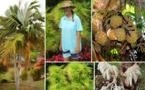 Patricia Frébault, collectionneuse de palmiers