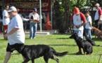 Le Club canin de Moorea rafle tous les prix en obéissance