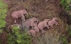 Chine: les éléphants s'offrent une sieste en pleine équipée