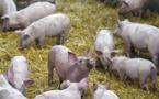 La requête des anti-porcherie rejetée