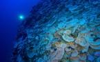 Bilan de l'Ifrecor : Les récifs du fenua tiennent bon, les poissons reculent