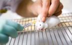 Des cartes postales pour transporter le sperme lyophilisé de souris